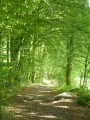 Sart-Custinne, ses forêts et la vallée de la Houille