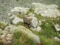 Le Pas des Ladres en passant par le Col de Fenestre