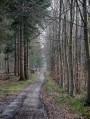 Dans la Forêt Domaniale Verte - Les Cotrets