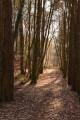 Boucle dans le massif forestier de Réno Valdieu