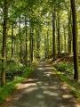 Ambiance en forêt