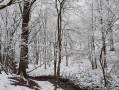Bois du Grand Fréchy à Biesme   neige