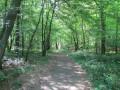 Chemin des Larrons à Cousolre