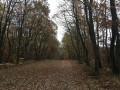 Bois Bellegrange