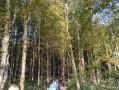 Entre forêt et vallée à Lucy