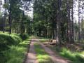 Boucle en forêt au départ d'Herbiester