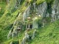 Le Hohneck La Réserve Naturelle Nationale de Frankenthal-Missheimle IBP 65