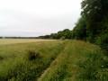 Chemin a travers les champs