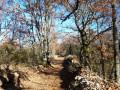 Chemins et Dolmens entre Chandolas et Font Méjanne