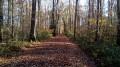 La Forêt de la Tête Ronde et le Bois de Saint-Aubin
