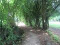 Chemin suivant les méandres de l'Hônelle
