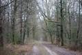Boucle forestière en Sologne sauvage