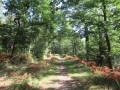 chemin dans le bois en direction des vignes