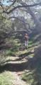 Dans la forêt primaire