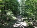 De Berru à Nogent : les bois de Berru