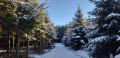 Dans les Bois de Poix Saint-Hubert