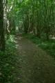 Forêt Domaniale de Montceaux