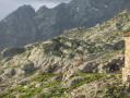 Des isards à côté de la cabane de Soucarrane
