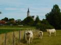 Eglise de Bouvines
