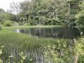 Etang sur la Wendelwasser
