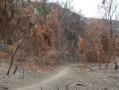 Étrange paysage après l'incendie