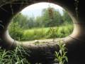 fenêtre sur la prairie