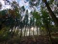 Forêt au dessus d'Anchamps