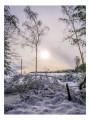 Forêt d'Anglier sous la neige