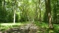 Boucle en Forêts de Ferrières et d'Armanvilliers