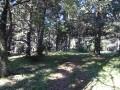 forêt de sapin
