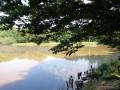 L'étang du Bois Bataille