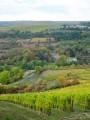 Hautes Côtes de Nuits entre Chevannes et l'Etang-Vergy