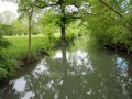 Le Marais de la Baronnerie depuis Damvix