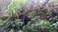 La forêt de Bélouve