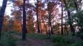 La forêt du début de la balade