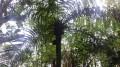 Le Sentier des 58 plantes indigènes