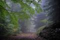 Chemin du Tarnon