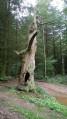 Le Chêne Chaudron