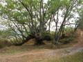 Chemin de la Forge, Askar et chêne millénaire à Urdax