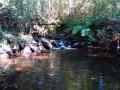 Le long du Rio Uima