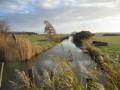 Le Marais d'Angoute, en allant vers les étangs de la Rosière.