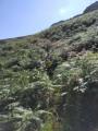 Les crêtes d'Iparla depuis Urdos