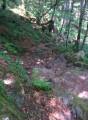 Crête des Hautes-Vosges et versant alsacien du Hohneck