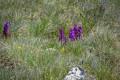 Orchidées en pleine floraison