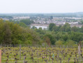 Au cœur du vignoble Saumur-Champigny
