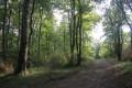 Parcours en forêt