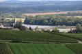 Paysage viticole avec vue sur Loire