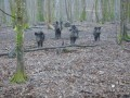 La Forêt de Champ-Fêtu