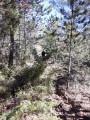 Sentier après l'arbre mort