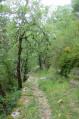 Sentier dans la montagne de Miollans